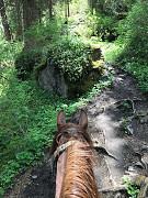 Аренда лошади Алматы